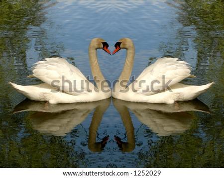 Love birds - swans