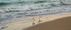 Love birds - Two seagulls standing together on the seashore looking at one another