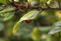 Love Bug on ibiscus flower 06/2020