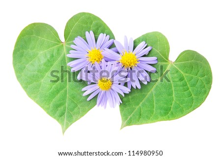 love concept: pair of hearts from leaves for happy valentine day or card. Isolated on white. Isolated on white.
