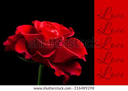 Love greeting card, red rose wallpaper,  valentine\'s day card.