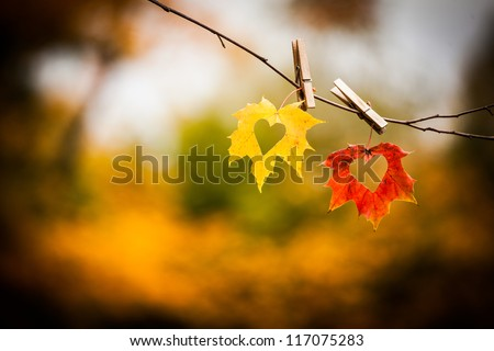 Love hearts cut in colorful autumn leaves on twig with nature background