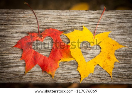 Love hearts on colorful autumn leaves with wooden background.