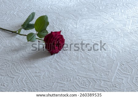 love, rose flowers on the bed with jewel,flowers rose on the bed with gift,  flowers for love, white background,