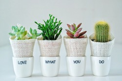 Love what you do, do what you love, beautiful cactus in a pot,