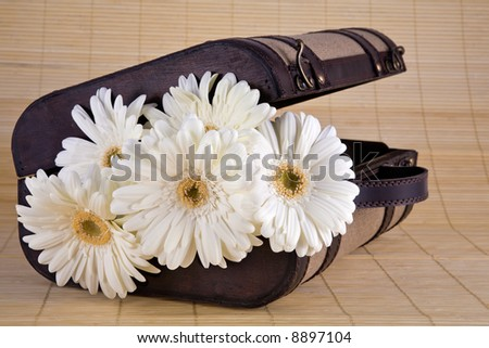 Lovely bouquet of white Gerber daisies in old style suitcase sitting on bamboo mat.