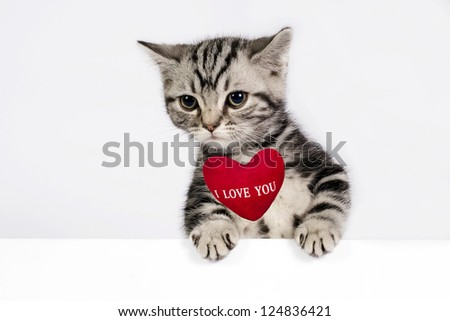 """Lovely British Shorthair kitten banner with sign """"I Love You"""" and  space for text."""