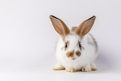 Lovely bunny easter brown and white rabbit on white background. Cute fluffy rabbit on white background Lovely mammal with beautiful bright eyes in nature life.Animal concept.