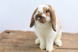 Lovely bunny easter brown rabbit on wooden table. Cute fluffy rabbit on wooden background Lovely mammal with beautiful bright eyes in nature life.Animal concept.