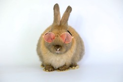Lovely bunny easter brown rabbit with eye glasses on white background. Cute fluffy rabbit, Lovely mammal with beautiful bright eyes in nature life.Animal concept.