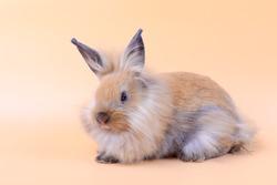 Lovely bunny easter rabbit on light orange background. beautiful lovely pets.