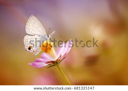 Lovely Butterfly and Flower