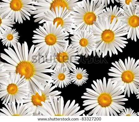 lovely camomiles (seamless pattern)