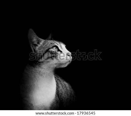 Lovely cat in black background - stock photo
