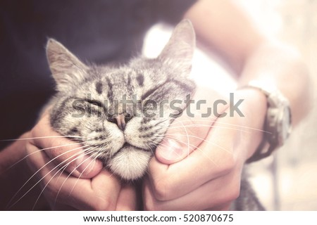 lovely cat in human hands, vintage effect love for the animals #520870675