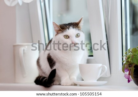 Lovely cat sitting on the window sill among the white cup and the pitcher