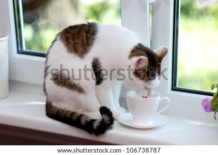 Lovely cat sitting on the window sill and drinking from the white cup