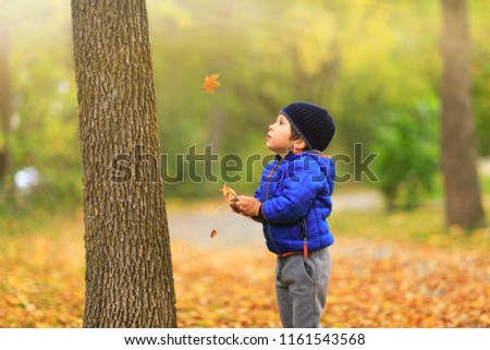 Lovely child catches the maple leaves in the fall during autumn sunny day. Cute boy gathers a golden fall leaf on background of autumnal park foliage. Best conceptual picture for media projects.