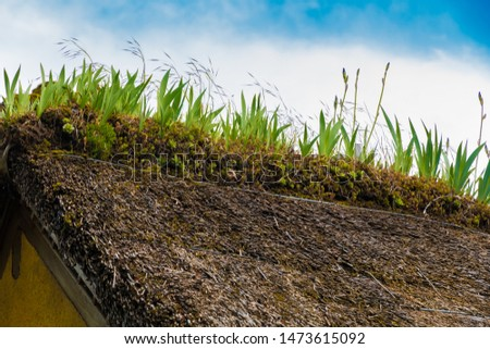 Lovely close-up view of purple French iris flower buds and succulents on the peak of a traditional thatched-rooftop house in France. Flowers growing on rooftops are typical in the Normandy region. #1473615092