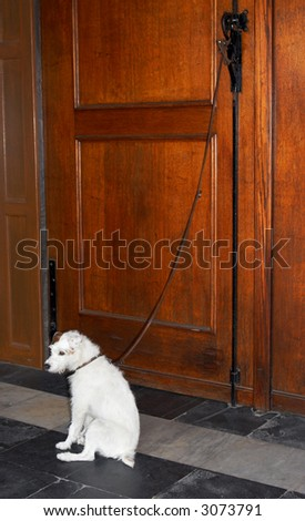 Lovely dog left alone on a leash, bound to a wooden door - stock photo