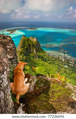 Lovely dog resting on the rock, Maupiti, French Polynesia, Society Islands