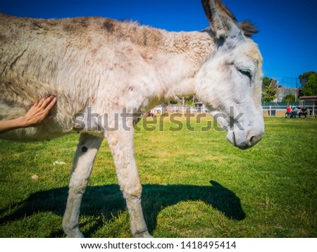 Lovely donkeys in Burrolandia, which is a farm located in Tres Cantos, Madrid, Spain, Europe.