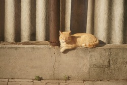 Lovely ginger cat resting on the stone fence in sunny day.