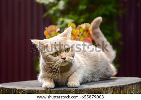 Shutterstock Lovely gray cat sitting on a stump in spring park