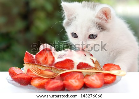 Lovely kitten eating  the strawberry cake with cream