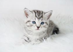 Lovely kitten portrait. Cute kitty kitten