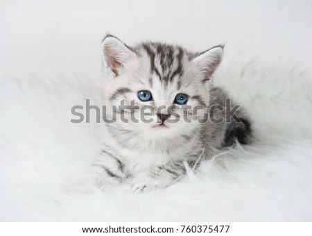 Lovely kitten portrait. Cute kitty kitten - Shutterstock ID 760375477