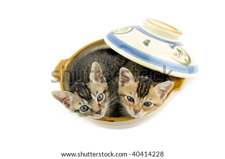 Lovely kittens in chinese bowl over white background