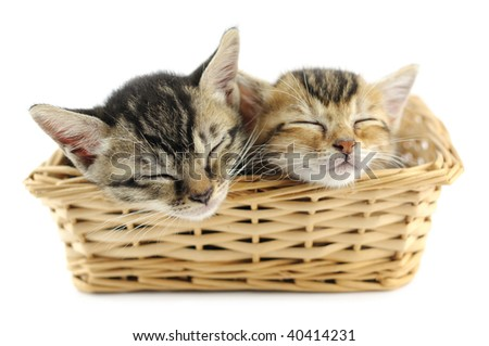 Lovely kittens sleeping in wicker basket, isolated on white