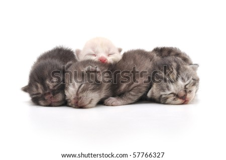 Lovely kittens sleeping together in isolated white background