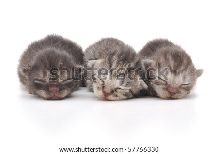 Lovely kittens sleeping together in isolated white background - stock photo