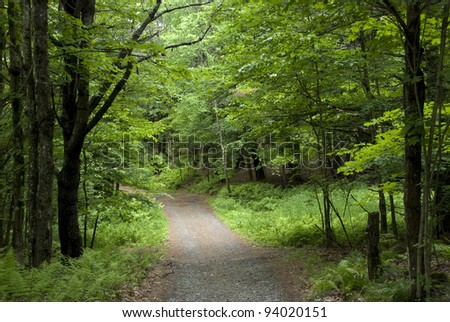 Lovely little gravel road through a bright green summer forest in Vermont.