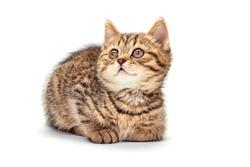 Lovely little kitten on white background