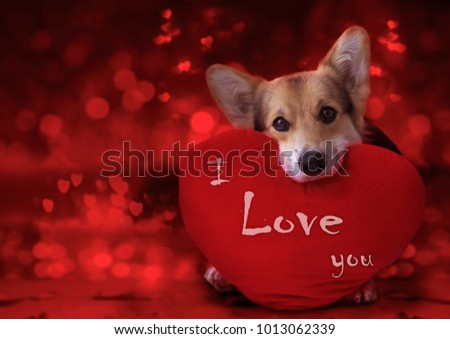 Lovely loving dog with a red heart on a red background. #1013062339
