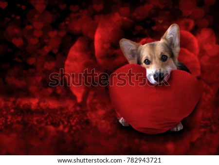 Lovely loving dog with a red heart on a red background. #782943721