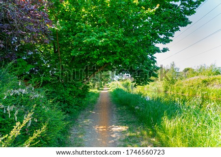 Photo of  Lovely lush green canal walkway, featuring a beautiful tree offering a moments shade in the summers heat