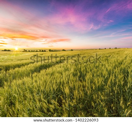 Lovely Panoramic Photo of a Wheat Field at Sunset Time #1402226093
