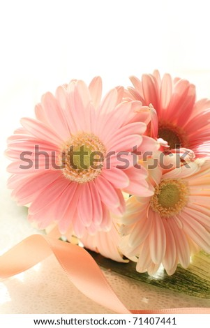 Lovely pastel pink daisy on white background