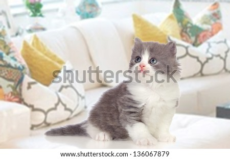 Lovely Persian kitten sitting on the couch at home