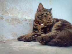Lovely pet, lovely cat, make your life brighter. Focus on the cat.