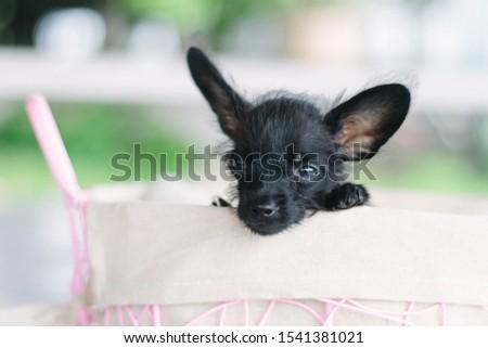Lovely pet. Lovely dog. Lovely animal #1541381021