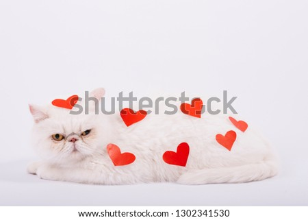 Lovely pets composition with white cat #1302341530