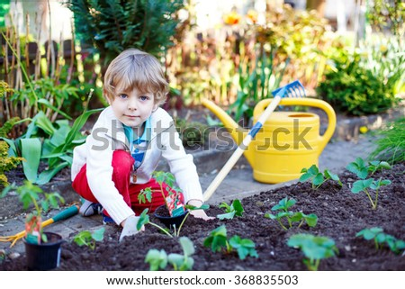 Lovely preschool blond kid boy planting seeds and seedlings of tomatoes in vegetable garden. Happy carefree childhood. Funny child having fun with gardening in spring.