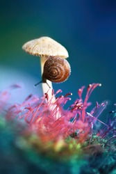 Lovely pretty little snail on a mushroom in the forest in nature macro. Beautiful colorful bright artistic image of the wild nature.