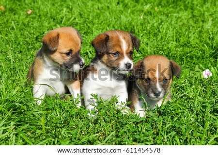 lovely puppies on green fresh grass #611454578