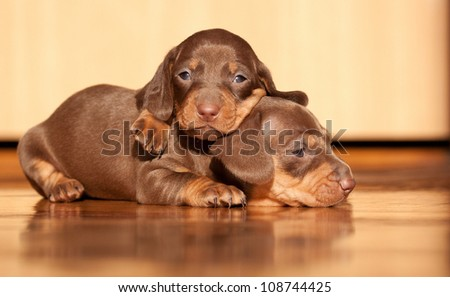 lovely puppies under sunlight